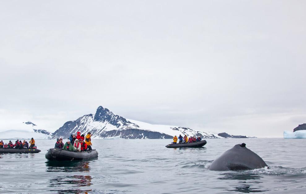 zwischen-feuerland-und-antarktis-4